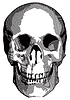 Monochrom-Grafik - menschlichen Schädel