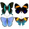 Vektor Cliparts: schöne Schmetterlinge