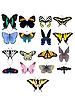 아름다운 나비의 컬렉션 | Stock Vector Graphics