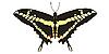 Vektor Cliparts: Zeichnen von Papilio machaon