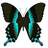 Vektor Cliparts: schöner Schmetterling