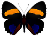 Vektor Cliparts: Schmetterling