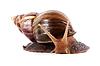 Akhatin`의 달팽이 | Stock Foto