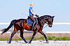 소녀 갈색 말을 타고 간다 | Stock Foto
