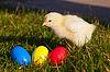 ID 3230220 | Küken mit bunten Ostereiern | Foto mit hoher Auflösung | CLIPARTO