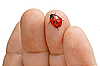 瓢虫的手 | 免版税照片