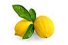 Zitronen mit Blättern zwei | Stock Foto