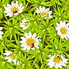 nahtloser Hintergrund mit Kamillen und Marienkäfern