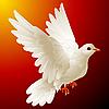 Белый голубь | Векторный клипарт