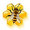 Biene und Waben