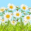 Weiße Blumen und grünes Gras