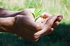 ID 3222058 | Małe drzewa w rękach | Foto stockowe wysokiej rozdzielczości | KLIPARTO