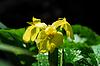ID 3227376 | Gelbe Lilienblüte | Foto mit hoher Auflösung | CLIPARTO
