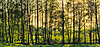 Spring sunny forest | Stock Foto