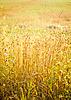 Light over field | Stock Foto