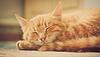 Little Red Kitten durmiendo en la cama | Foto de stock