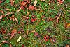 Rowan berries in grass | Stock Foto