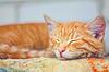 Joven durmiendo gatito | Foto de stock