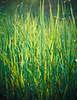 Fresh spring green grass | Stock Foto
