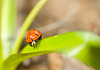 ID 3237986 | Ladybird on grass | High resolution stock photo | CLIPARTO