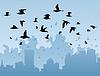 Vögel über Stadt