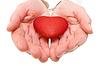 Rotes Herz in Händen Frau | Stock Foto