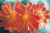 Bukiet z czerwonym kwiatem | Stock Foto