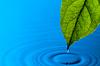 녹색 잎과 물 드롭 | Stock Foto