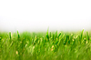新鲜的绿草如茵的背景 | 免版税照片