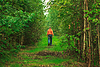 Man Walking im Wald | Stock Foto