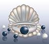 Seashell und Ring mit Black Pearl