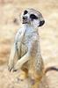 얼룩 다람쥐 | Stock Foto