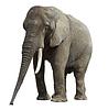 Elefant | Stock Foto