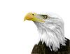 ID 3314608 | 미국의 대머리 독수리 | 높은 해상도 사진 | CLIPARTO