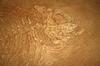 ID 3315617 | Riesen Fischfossilien | Foto mit hoher Auflösung | CLIPARTO
