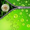 잔디와 지퍼에 민들레 | Stock Foto