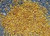 Abstrakte gelben Blüten auf Asphalt-, Umwelt- | Stock Foto
