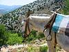 Grecia, Creta, mula en la montaña | Foto de stock