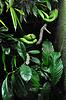 Serpiente verde en terrario zoo | Foto de stock