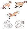 Lisy polarne i lisy | Stock Illustration
