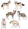 Schakale, afrikanische Wildhunde und Hyänen | Stock Illustration