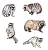Waschbären und Marderhunde | Stock Illustration
