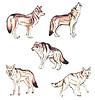 Wilki i kojoty | Stock Illustration