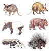 Exotische Tiere | Stock Illustration
