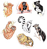Lemury, tarsjusz tamarin i lenistwo | Stock Illustration