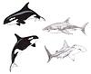 Schwertwale und Haie | Stock Illustration