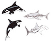 ID 3349184 | 상어와 범고래 | 높은 해상도 그림 | CLIPARTO