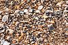 Tło wykonane z muszelek | Stock Foto