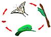 Butterfly ciclo de vida. Metamorfosis | Ilustración vectorial