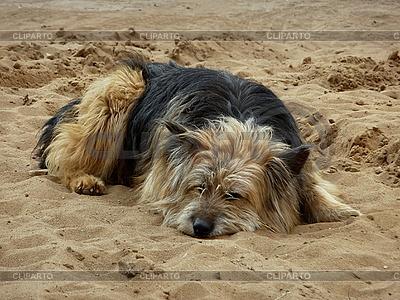 Hund am Sandstrand | Foto mit hoher Auflösung |ID 3010991
